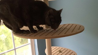 Contempo Cat Elevation Modular Cat Tower product review