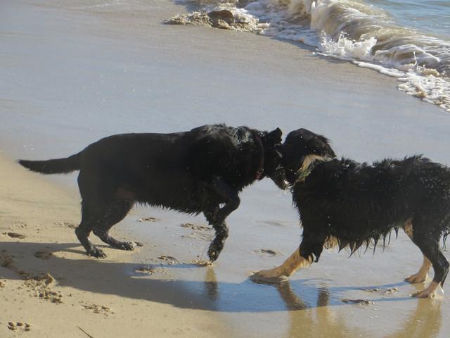 beach battle