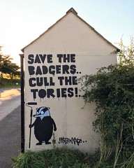"""""""Save The Badgers Cull The Tories!"""""""