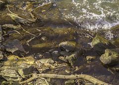 Bronx River Rushing Water