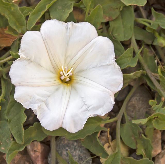 Wildflower1_1102