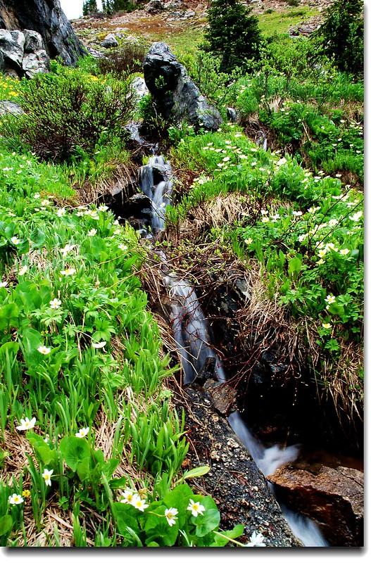 Wildflowers and Waterfall 3