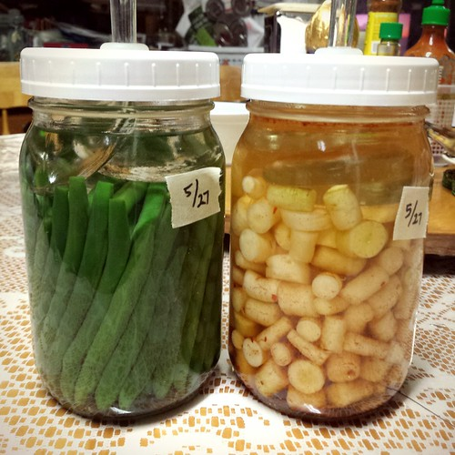 Making lacto-fermented Green Beans and Lunar White Carrots.