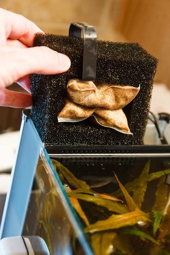 Seachem Purigen 100ml Bag in Filter of Fluval Spec Aquarium