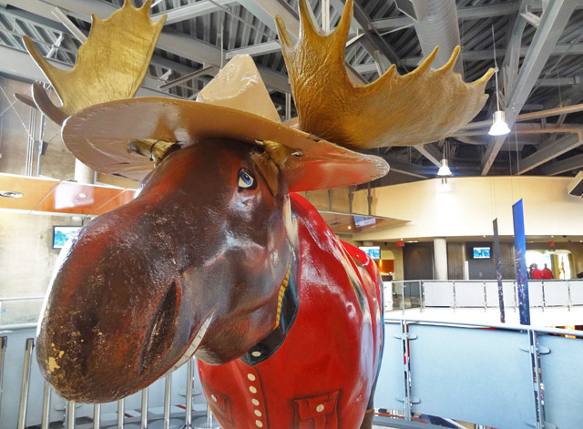mountie-moose