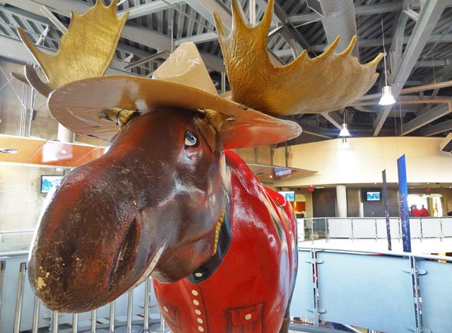 mountie-moose