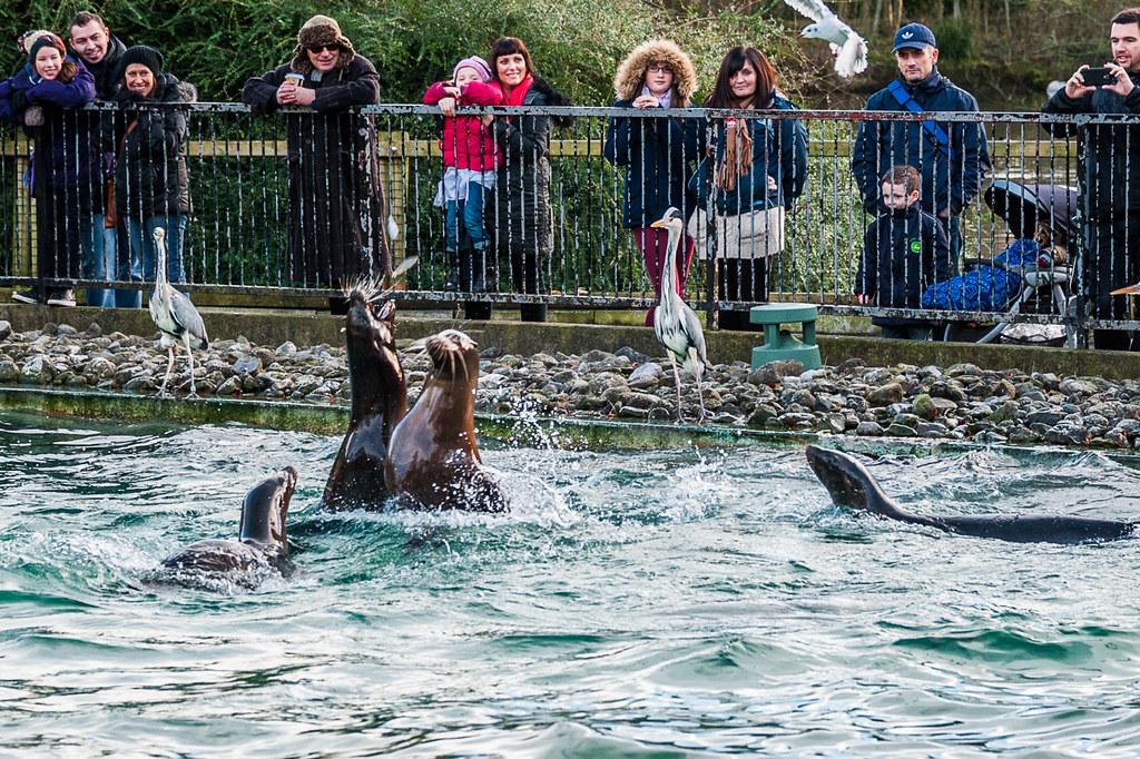 Зоопарк в Дублине - воскресная прогулка