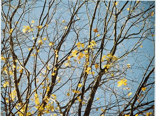 More autumn leaves, 2