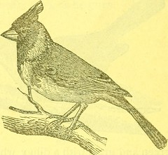 "Image from page 59 of ""The Bird food company's book of cage birds:"" (1883)"