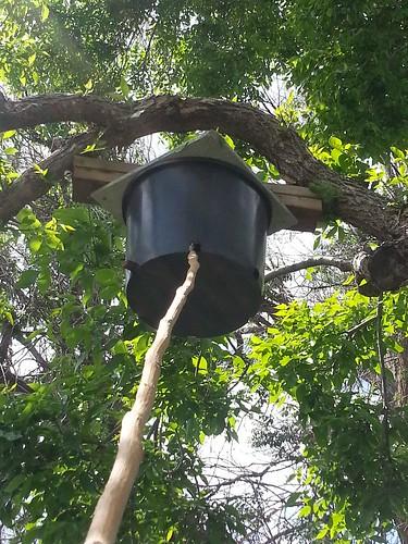 2014.05_bait hive