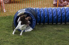 Southern agricultural show 2014 - Sunday (89)