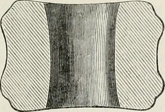 "Image from page 194 of ""The ancient stone implements, weapons, and ornaments, of Great Britain"" (1872)"