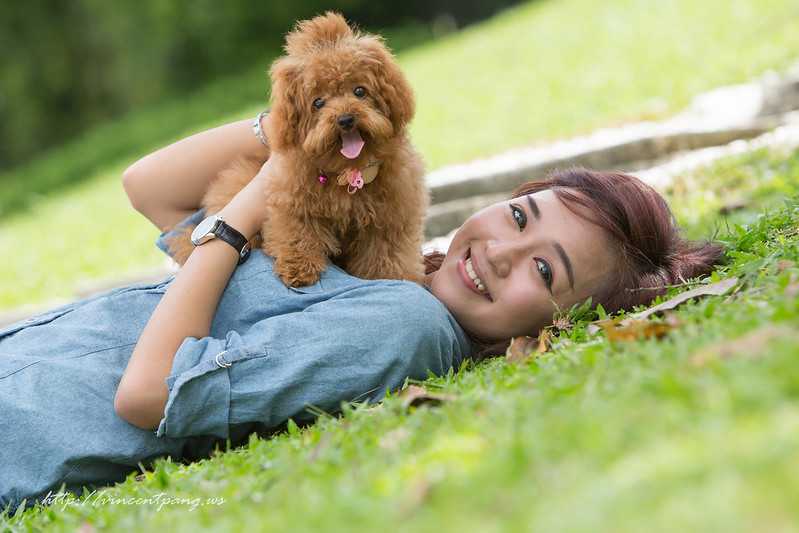 pet, dog, poodle, toy poodle, pet photography