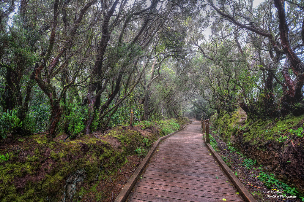 Sendero de los sentidos (IV). Parque Rural de Anaga. Tenerife