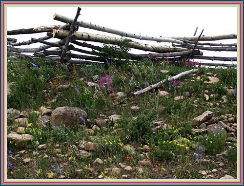 flowers rural fence colorado wildflowers sanjuanmountains sanmiguelrange