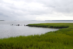 wetland, horizon, polder, grass, sea, river, plain, loch, lake, natural environment, shore, salt marsh, coast, grassland,