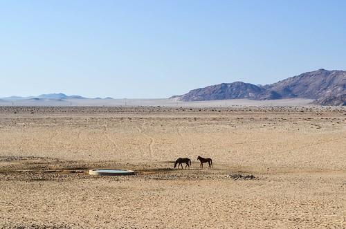Garub wild horses, Namibia