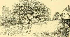 "Image from page 128 of ""Essex naturalist: being the journal of the Essex Field Club"" (1887)"