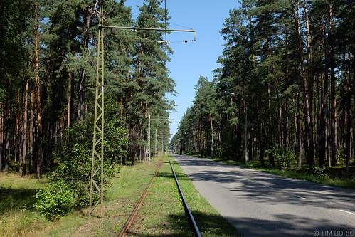 forest bos wald tramlijn tramwayline strassenbahnlinie