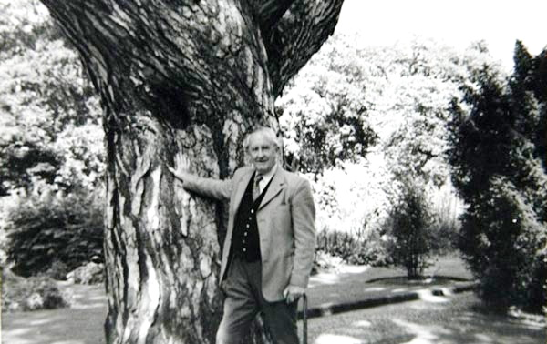 tolkien_ Pinus nigra