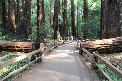 sanfrancisco woods muir