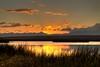 Sunset at Camas National Wildlife Refuge