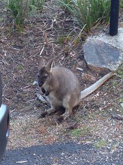 Freycinet furry friends
