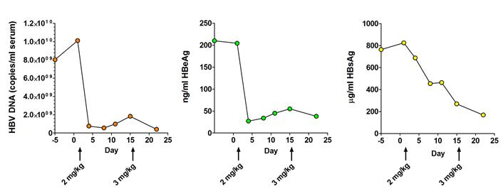 ARC_520_Chimp Graphs