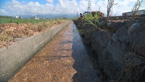 大雨過後路面及水溝被稻桿淹沒