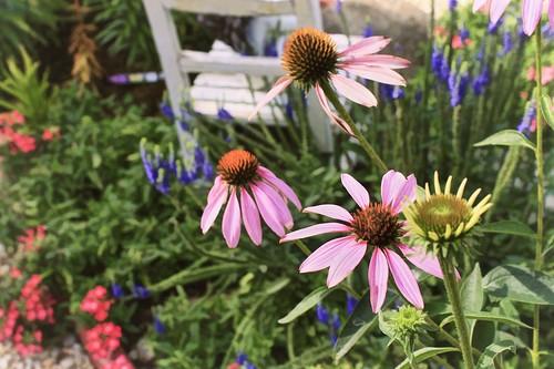 Echinacea: Topaz Simplify