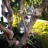 Our tree climber, Johan. #cat #catsofinstagram #motion #tree #climbing #lease #green