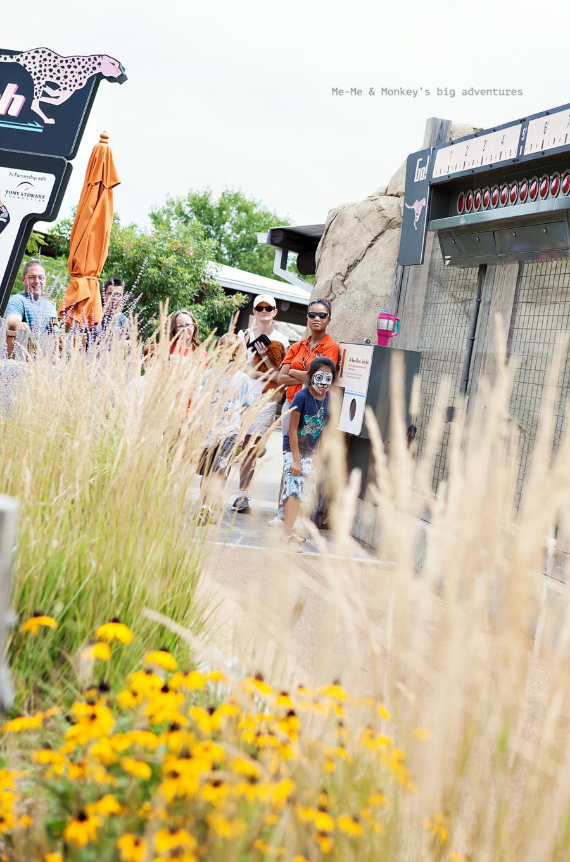 zoo 7 blog