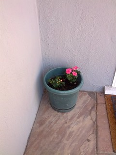 Extra impatiens on the front porch, a month ago