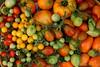 Tomatid / Tomatoes