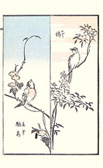 Left - Japanese morning glory and Japanese robin; Right - heavenly bamboo and brown-eared bulbul