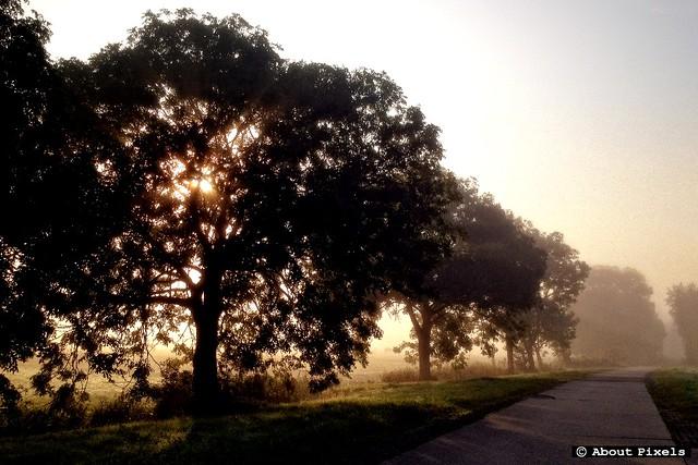 2012-09 Zonsopkomst in de polder (Zwartewaal)