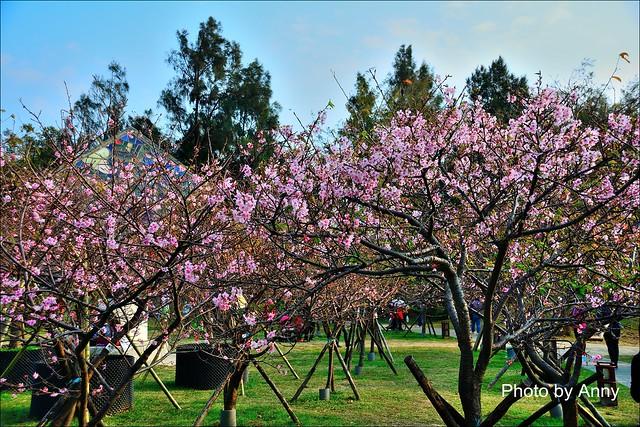 麗池櫻花31