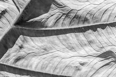 Leaf pattern - monochrome