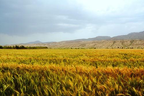eve pakistan 2 adam geotagged nikon peace wheat 7 pakistani aph geotaged zadu gallian baluchistan aperfectheart d5200 barkhan nikond5200 umergmalik umergmyahoocom