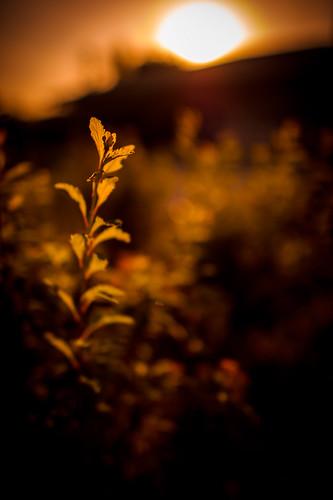 park light sunset shadow red orange blur japan contrast ed leaf nikon bokeh f14 osaka 24 24mm transparent nikkor afs tsurumi ryokuchi f14g d3s