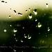 Rain? by Madeeha Al-Hussayni