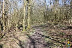 Spring arriving in Clouts Wood