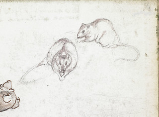 Sketch of a rat, from two different angles [Sketchbook 7, inside back cover] / Croquis d'un rat vu sous deux perspectives différentes [Carnet de croquis 7, dedans de la couverture arrière]