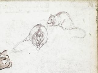 Sketch of a rat, from two different angles [Sketchbook 7, inside back cover] / Croquis d'un rat vu sous deux perspectives différentes [Carnet de croquis 7, dedans de la couverture arrière]