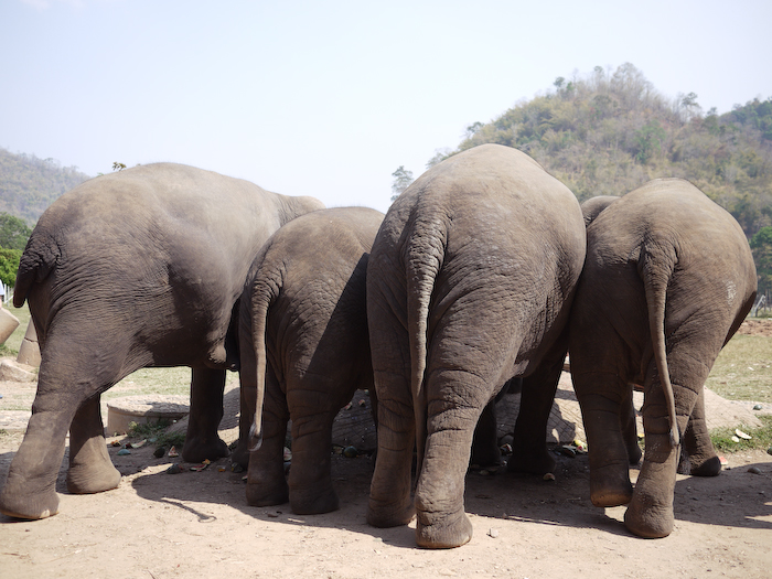 Elephant Nature Park Chiang Mai-29