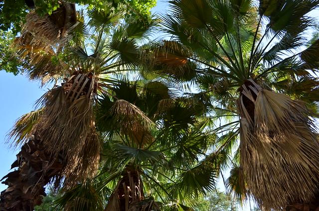 Trio of Palms