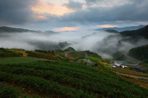 travel pink light mountain color fog comfortable night clouds creek sunrise canon relax landscape dawn spring view vibrant foggy taiwan trails fresh valley rails rays nightview dawning 夜景 idyllic teagarden 風景 daybreak hillwood seaofclouds vigor 雲海 晨曦 pinglin 日出 vitality 耶穌光 茶園 landscapephotography colortemperature teaplantations 坪林 霧 energetic 清晨 teafield 北勢溪 雲霧 山景 ruralscenery 山谷 芒花 晨景 嵐 晨昏 山色 南山寺 色溫 霞光 彩霞 風景攝影 台灣風景 vehicletrack 新北市 newtaipeicity 朝氣 晨霞 谷景 樟空子 舒爽 aromaoftea