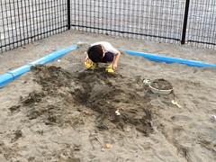 公園の砂場で遊ぶとらちゃん 2014/7
