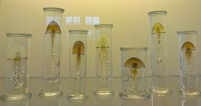 Jellyfish Installation by Steffen Dam