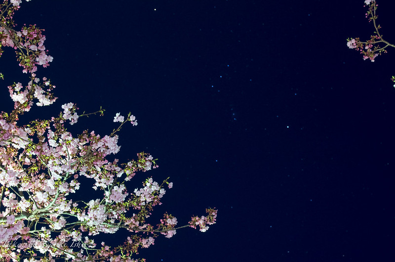 Photo:IMGP0213.jpg By:Naoki Ishii